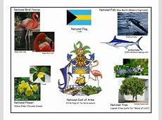ASJBahamas National Symbols Info for each one BAH