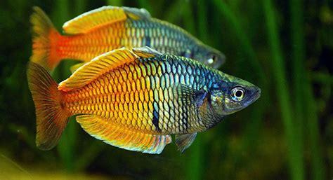 aquariums the finest quality aquarium livestock and supply in miami