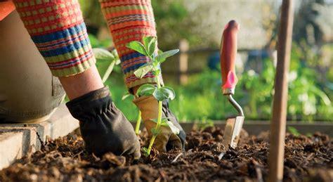 Fertilizantes Caseros Y Ecológicos Para El Jardín