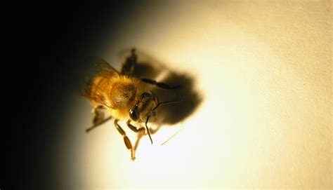 are bees color blind honey bees sharper eyesight than we thought