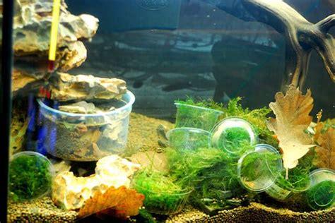 nouvel aquarium d eau douce tetra 130 litres mon premier aquarium
