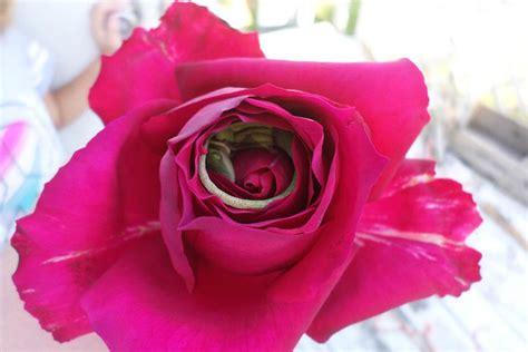 l image de la semaine un l 233 zard somnole 224 l interieur d une fleur baya tn