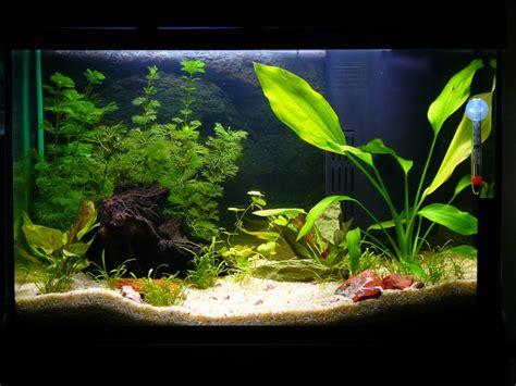 mon aquarium de 60 litres