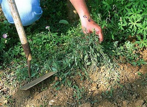 1000 id 233 es 224 propos de vinaigre des mauvaises herbes sur d 233 sherbant au vinaigre