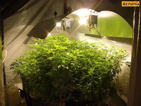 comment conserver le cannabis du growshop alchimia