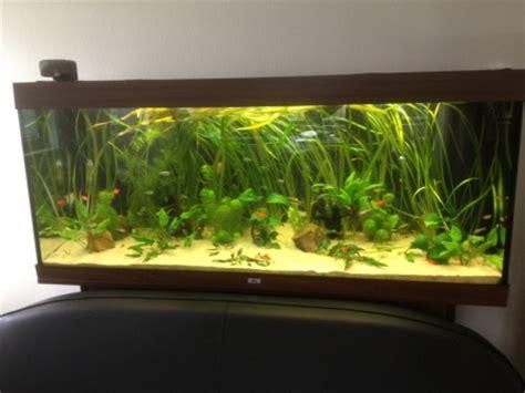 aquarium apr 232 s intervention