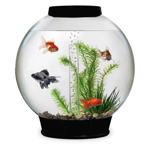 biorb fish tanks all sale free uk delivery petplanet co uk