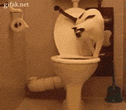 toilet paper cat gif find on giphy