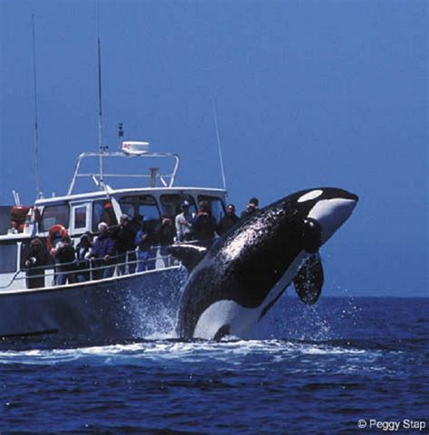 Monterey Whale Watching Boats whale watching monterey ca http www montereyinfocenter