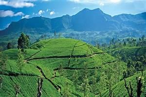 Sri Lanka Immobilien : circuit sri lanka authentique privil ge 4 et 5 sri lanka promovacances ~ Markanthonyermac.com Haus und Dekorationen