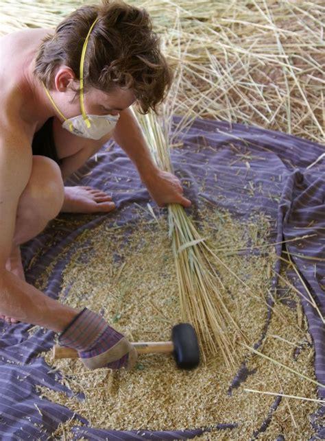 sonora wheat harvest winwinfarm