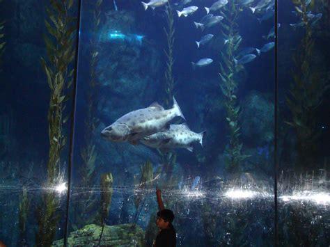 cichlids aquarium of the pacific
