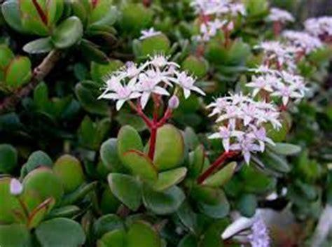 les plantes merveilleuses du feng shui feng shui