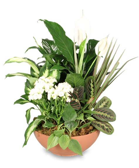 Flower Shops In Palm Gardens Florida blooming dish garden green blooming plants in palm