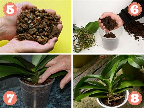 1000 ideas about rempoter une orchid 233 e on rempoter orchid 233 e une orchid 233 e and