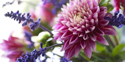 Fresh Cut Flower Tips  How To Make Fresh Flowers Last. Belong Together Signs Of Stroke. Lime Green Signs. Pallet Wood Signs Of Stroke. Metal Wall Signs Of Stroke. Rally Signs Of Stroke. Granuloma Annulare Signs. Buddhist Signs Of Stroke. Watch Signs