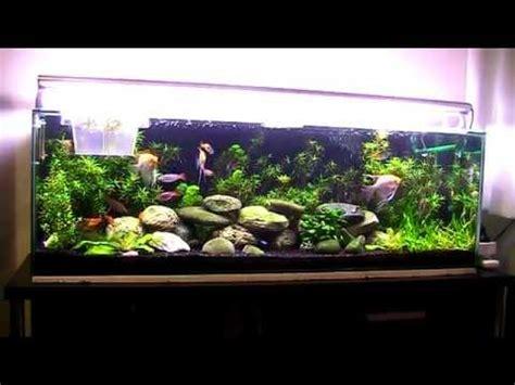 tropical aquarium 200 litres 52 gallons update 2