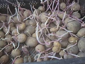 Kartoffeln Und Zwiebeln Lagern : kartoffel einlagern mein garten ratgeber ~ Markanthonyermac.com Haus und Dekorationen