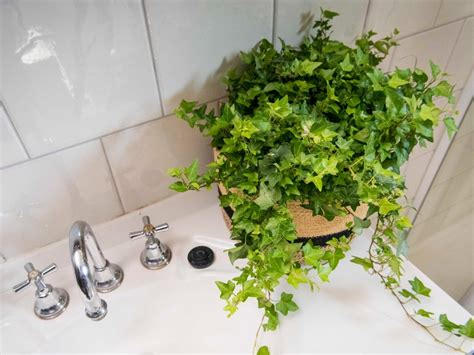 the plants that will actually thrive not die in your bathroom