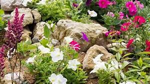 Kiesbeet Anlegen Bilder : steingarten anlegen passende steine und steingartenpflanzen ~ Markanthonyermac.com Haus und Dekorationen