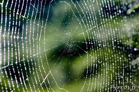 toiles d araign 233 es couvertes de ros 233 e