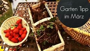 Garten Was Tun Im März : garten f r den fr hling fit machen erdbeeren im m rz pflanzen garten tipps youtube ~ Markanthonyermac.com Haus und Dekorationen