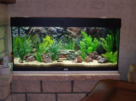 photo d 233 coration d aquarium eau douce