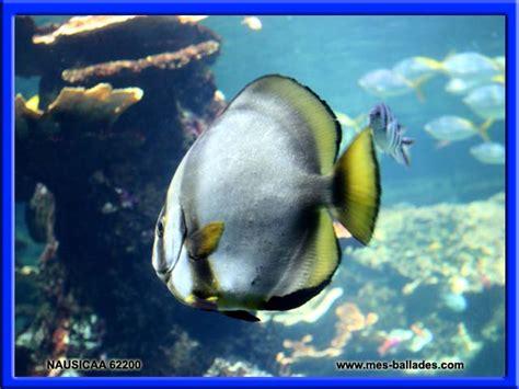 nausicaa l aquarium geant a boulogne sur mer dans le pas de calais 62200