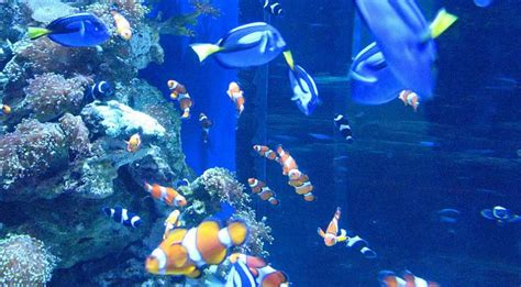 aquarium of the pacific discount tickets save 15 95