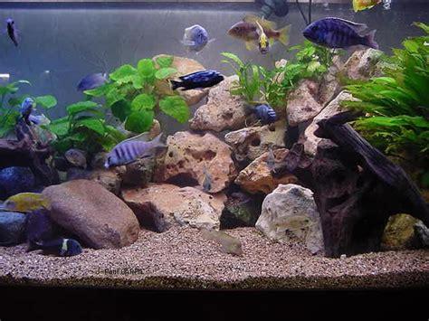 installation fabrication d 233 cor aquarium pas cher