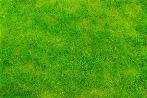 Gelbe Stellen Im Rasen : rasen wird braun das k nnen sie tun ~ Markanthonyermac.com Haus und Dekorationen