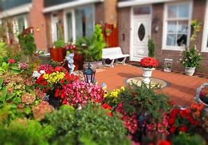 Garten Blumen Pflanzen : 20 beliebte garten blumen f r fr hling sommer herbst winter ~ Markanthonyermac.com Haus und Dekorationen