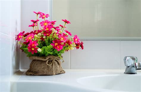 plants for bathroom australia 28 images indoor plants for beginners the best bathroom