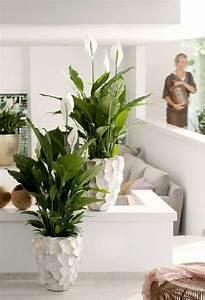 Zimmerpflanze Lange Grüne Blätter : sch ne badpflanzen verwandeln das badezimmer in eine wohlf hloase ~ Markanthonyermac.com Haus und Dekorationen