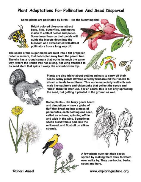 Animal Pollinators  Pollination And Seed Dispersal