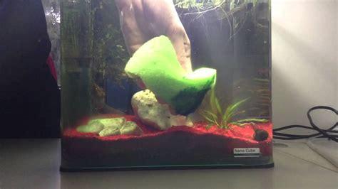 nettoyer un aquarium rendre les vitres de l aquarium plus propres