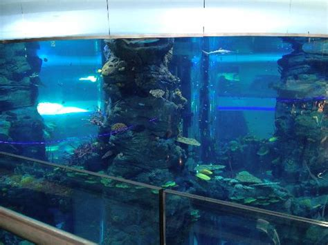 aquarium in center of mall photo de morocco mall casablanca tripadvisor