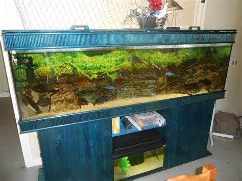 petites annonces aquarium tout 233 quip 233