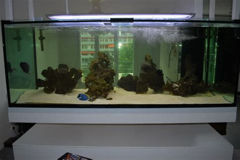 entretien d un aquarium de 400 litres en eau douce bien plant 233