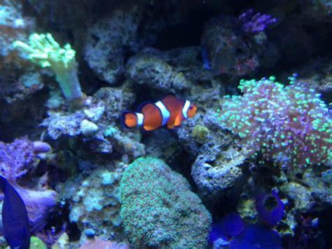 underwater walk through tunnels picture of sea minnesota aquarium bloomington tripadvisor