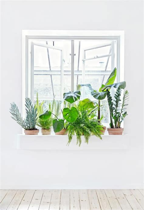 best 25 window plants ideas on minimal cactus and green plants
