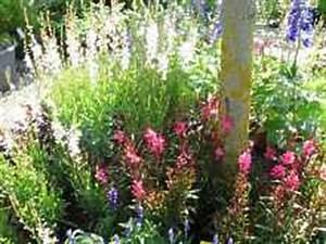 Kiesbeet Anlegen Bilder : kiesgarten anleitung bepflanzung beispiele fotos bilder ~ Markanthonyermac.com Haus und Dekorationen