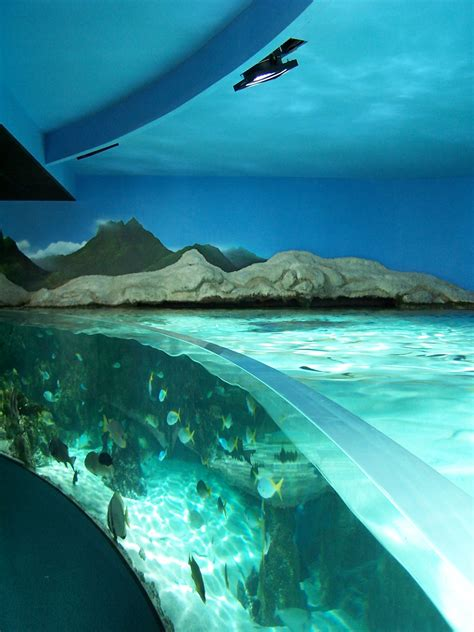 fichier aquarium de la rochelle bassins 005 jpg wikip 233 dia