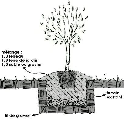 planter un olivier fiches conseils сади planters gardens and garden terrarium