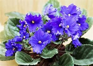 Pflegeleichte Zimmerpflanzen Mit Blüten : pflegeleichte topfpflanzen zimmerpflanzen die wenig licht ben tigen ~ Markanthonyermac.com Haus und Dekorationen