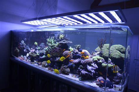 galeries et res eclairages a led pour aquariums photo et