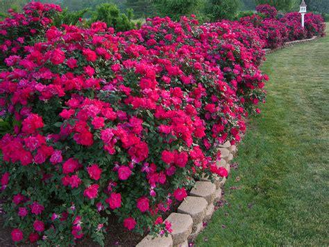 pelaez flower bed