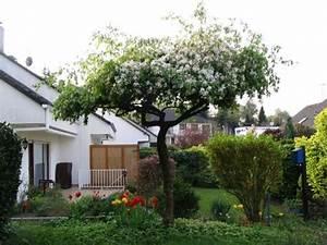 Kleine Bäume Für Den Garten : zierkirsche shirotae b ume als sonnenschirme seite 1 gartengestaltung mein sch ner ~ Markanthonyermac.com Haus und Dekorationen