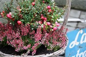 Immergrüne Winterharte Kübelpflanzen : herbst balkon winterhart raum und m beldesign inspiration ~ Markanthonyermac.com Haus und Dekorationen