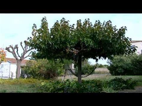 vid 201 o la taille de l autre arbre